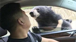 熊咬人事件视频监控曝光