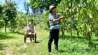 海南万宁打造咖啡产业闭环