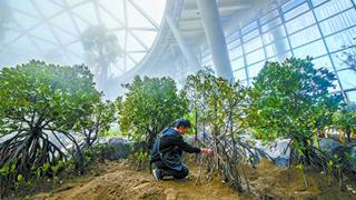 植物馆温室完成布展