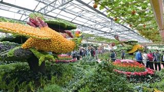 蔬菜新技术亮相菜博会