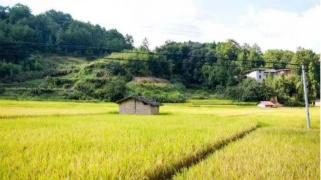 早稻生产有力推进
