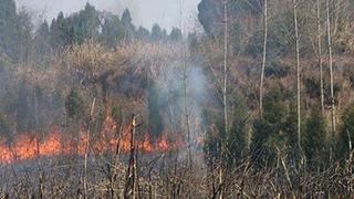 持续干旱森林火险等级升高