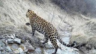 野生动物调查人员开展调研