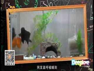 中国宠物报道